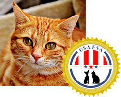 Register your emotional support cat or other animal at USA ESA